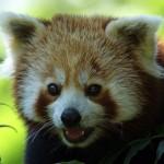 [SEO] パンダアップデート 4.0 の影響と思われる検索流入の減少を改善するために行ったこととその結果